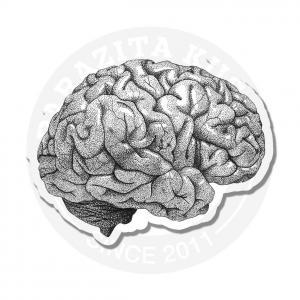 мозг<br>